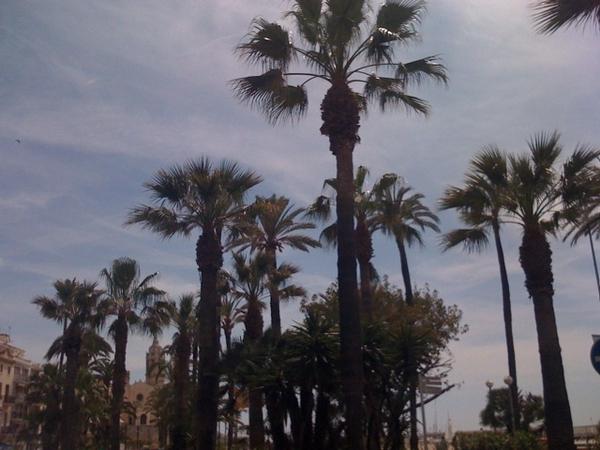 Magic palms & palms & palms & ...